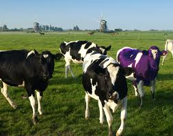 another purple cow image