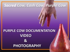 Purple-Cow-Video-Photography360